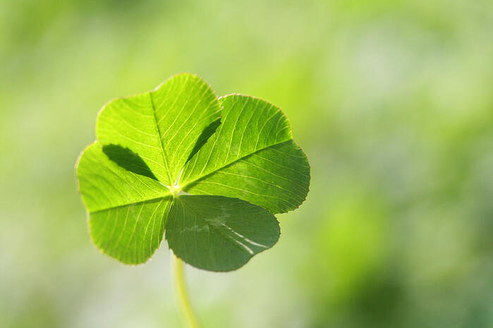 Don't Rely on Luck: Why Small Businesses Need Disaster Recovery Plans